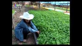 getlinkyoutube.com-หนองคาย - ปลูกผักขึ้นฉ่ายไร้ดิน เป็นอาชีพเพื่อจำหน่ายหารายได้เลี้ยงครอบครัว