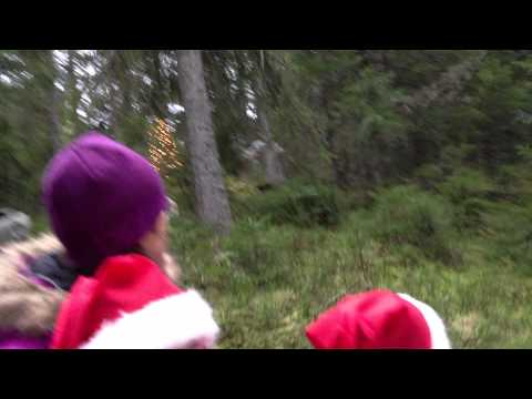 Horse and purno Tomteland Mora Sweden 3 Dec 2011 part 2