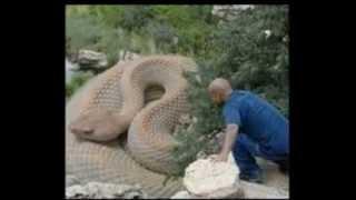 getlinkyoutube.com-Самые большие змеи в мире .