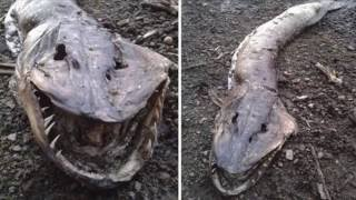 getlinkyoutube.com-5 Terrifying Real Monsters That Have Been Discovered