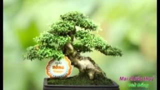 getlinkyoutube.com-cây bonsai dep