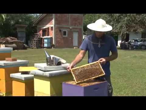 Mladenovac: Nagrađen mladi pčelar Igor Stanković