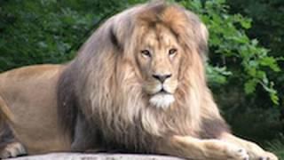 getlinkyoutube.com-Zoo Leipzig - Africa
