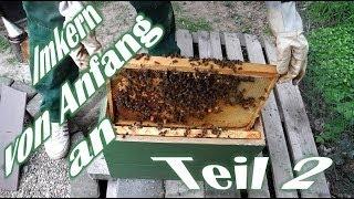 getlinkyoutube.com-Imkern von Anfang an - Teil 2 - Der erste Ableger - Das erste Bienenvolk - Bienen für Anfänger