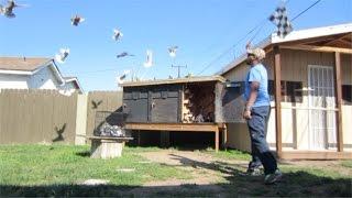 getlinkyoutube.com-How to Home Pigeons ?