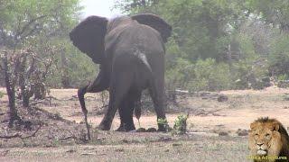 getlinkyoutube.com-Huge Elephant Poop And Pee
