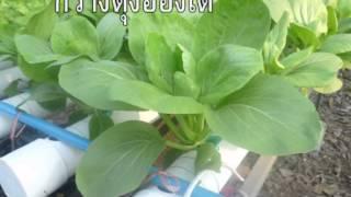 getlinkyoutube.com-การปลูกผักไฮโดรโปรนิกส์แบบง่าย ๆ