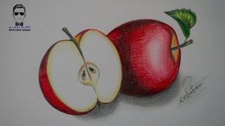 كيفية تعلم رسم تفاحة بالرصاص والالوان الخشبية مع الخطوات للمبتدئين