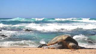 Hawaiian Honu RX100M4 4KTest Video