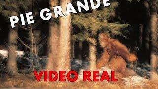 getlinkyoutube.com-Los 7 Videos Mas Impactantes De Pie Grande