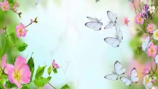 getlinkyoutube.com-бабочка