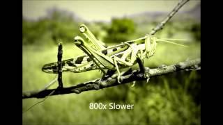 getlinkyoutube.com-Crickets Chirping Slowed Down 800% (creepy)