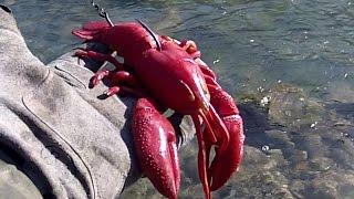getlinkyoutube.com-Pesca de Super Pepino con Bogavante de vinilo Red Real Craw