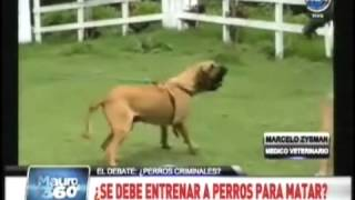 getlinkyoutube.com-4 Perros atacan y matan a delincuente en Glew