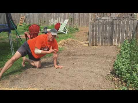 Good Gardening Positions to Plant Lettuce Seeds and Harvest Chickweed