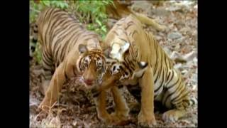 getlinkyoutube.com-Baby Einstein - Wild Animal Safari Amazon Trailer