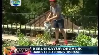 getlinkyoutube.com-Berkebun Sayuran Organik Di Atap Rumah bisa  Kenapa Ngga ini Buktinya