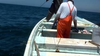 getlinkyoutube.com-Pesca de Mero de 160 kg. en Las Barrancas, Municipio de Comondú