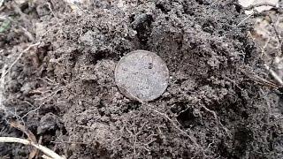 getlinkyoutube.com-Поиск монет с АКА Сигнум МФТ 7272М №1 Советы