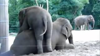 getlinkyoutube.com-حيوانات مضحكه جدا جدا هههههههههه