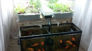 getlinkyoutube.com-Small-Scale Aquaponics System For Hobbyists/Beginners