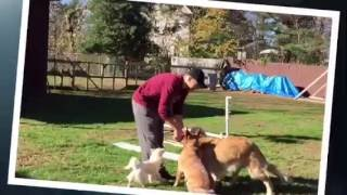 Happy Dogs (HDBT) Doggy Daycare & Camp in Laurel Springs, NJ