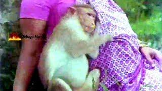 getlinkyoutube.com-Monkey Saves Pregnancy Lady  _Punnami Nagu_ Chiranjeevi, Rathi