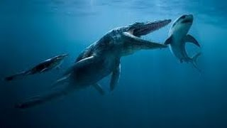 getlinkyoutube.com-Extraña Criatura Devora un Tiburón en Australia