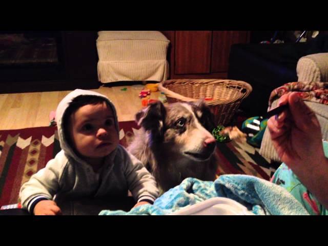 """И кучето ќе рече """"Мама"""" за еден залак"""
