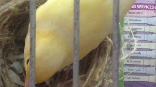 getlinkyoutube.com-الحل مع الانثى التي تأكل بيضها