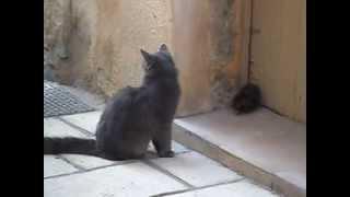 getlinkyoutube.com-Briga de Gato e Rato, a mais recente! fight of cat and mouse