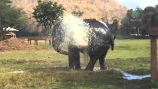getlinkyoutube.com-Elephant break the sprinkler and play
