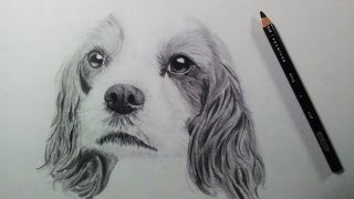getlinkyoutube.com-Drawing a Dog (Puppy) - Time Lapse