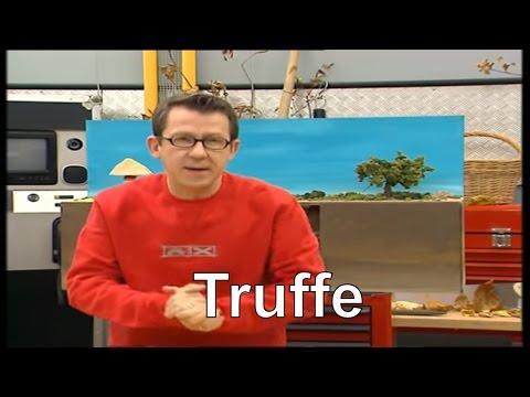 Pourquoi la truffe vit-elle en association avec un arbre ? - C'est pas sorcier