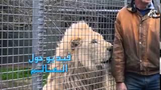 getlinkyoutube.com-اسد غاضب يريد يأكل الحارس