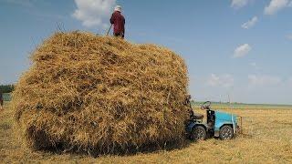 getlinkyoutube.com-Мини трактор переломка. волокуша. солома