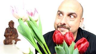 getlinkyoutube.com-Tulipanes - cuidados y reproducción