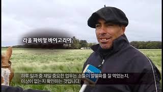 getlinkyoutube.com-'육식의 반란-마블링의 음모' 전주MBC 유룡 기자, 한국방송대상 수상작