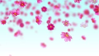 getlinkyoutube.com-Pink cosmos flowers - Free motion background loop