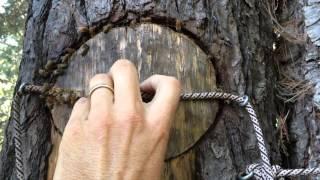 getlinkyoutube.com-Vertical Log Hive in Autumn