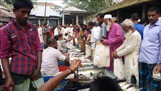 Huge Fish Available Biggest Village Fish Market in Bangladesh