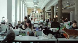 getlinkyoutube.com-Catvertising