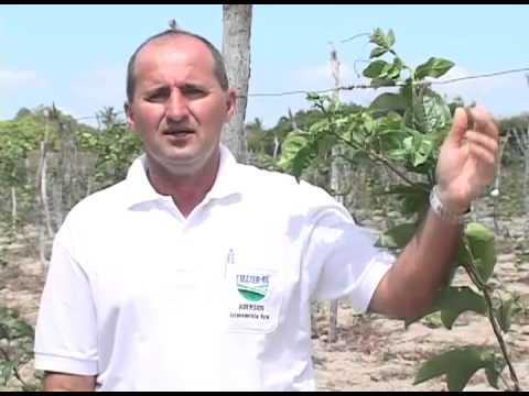 TV RURAL 276   PLANTIO DE MARACUJÁ   PARTE 1