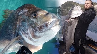getlinkyoutube.com-SPEARFISHING - The Hauraki Gulf - New Zealand