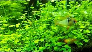 getlinkyoutube.com-0からのゆっくり水草水槽・熱帯魚に挑戦!pt③