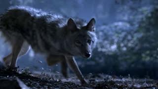 getlinkyoutube.com-Teen Wolf - Scott McCall's Pack