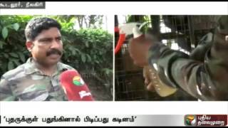 Trapping tiger in Thevarsolai in Nellai will be delayed: Officials