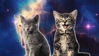 Прикол очень смешно рыжик дурачится и пукает смешной котенок.