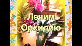 getlinkyoutube.com-Лечим Орхидею 🌺🚑🚨