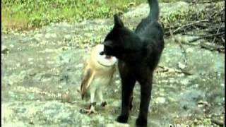 getlinkyoutube.com-Cat and owl playing - Fum & Gebra - Perfect friendship!
